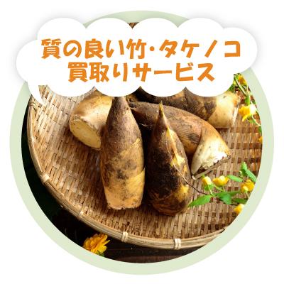 質の良い竹・タケノコ買取りサービス